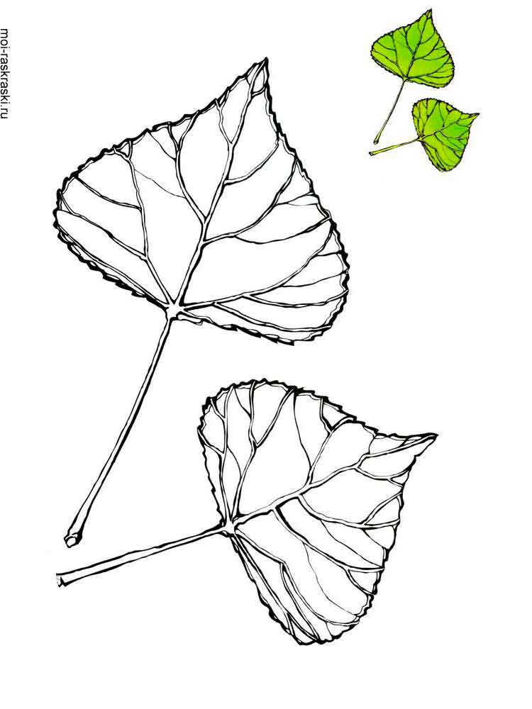 Poplar Tree Coloring Pages For Kids Free Printable Poplar