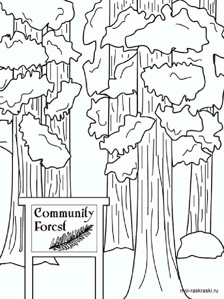 Sequoia Tree Coloring Pages 1