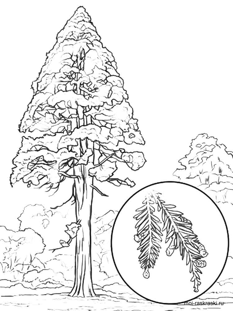 Sequoia Tree coloring pages for kids. Free Printable ...