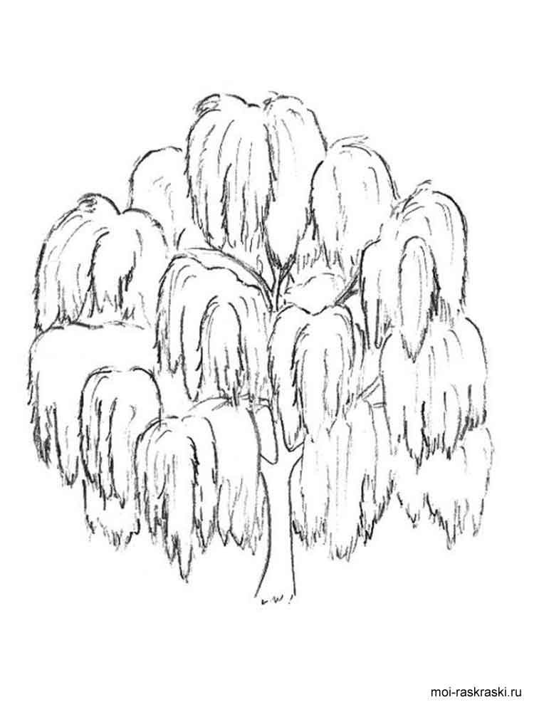 Coloring Page Willow Tree. Willow Tree coloring pages for kids  Free Printable