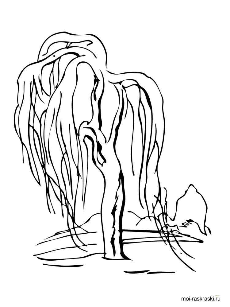 Willow Tree coloring pages for