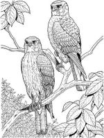 adult-coloring-pages-to-print-24