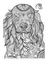 adult-coloring-pages-animals-11