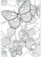 butterfly-coloring-pages-for-adults-12