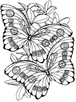 butterfly-coloring-pages-for-adults-19