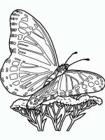 butterfly-coloring-pages-for-adults-21