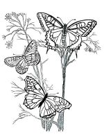 butterfly-coloring-pages-for-adults-22