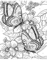 butterfly-coloring-pages-for-adults-3