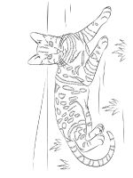 easy-coloring-pages-for-adults-7