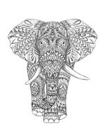 free elephant coloring pages for adults printable to download elephant coloring pages