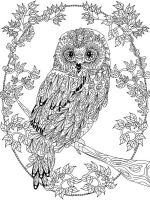 owl-coloring-pages-for-adults-10