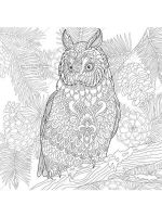 owl-coloring-pages-for-adults-11
