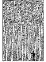 zentangle-bamboo-coloring-pages-5