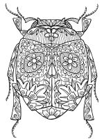 zentangle-beetle-coloring-pages-1