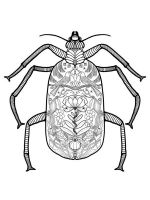 zentangle-beetle-coloring-pages-6