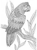 zentangle-birds-coloring-pages-13