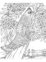 zentangle-birds-coloring-pages-2