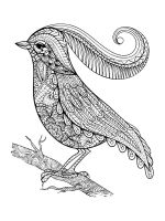 zentangle-birds-coloring-pages-24