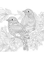 zentangle-birds-coloring-pages-4