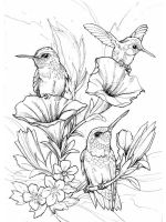 zentangle-birds-coloring-pages-6