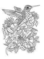 zentangle-birds-coloring-pages-9