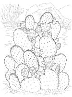 zentangle-cactus-coloring-pages-5