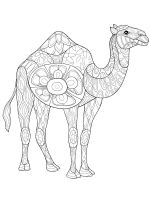 zentangle-camel-coloring-pages-1