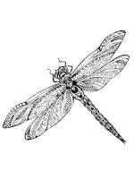 zentangle-dragonfly-coloring-pages-4