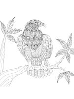 zentangle-eagle-coloring-pages-1
