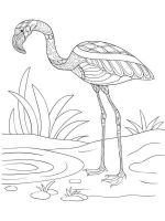zentangle-flamingo-coloring-pages-10