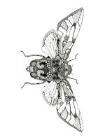 zentangle-fly-coloring-pages-5