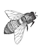 zentangle-fly-coloring-pages-6