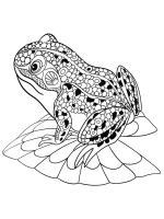 zentangle-frog-coloring-pages-1