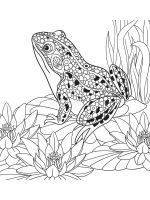 zentangle-frog-coloring-pages-12