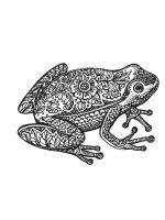zentangle-frog-coloring-pages-13