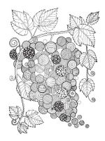 zentangle-fruit-coloring-pages-3
