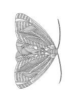 zentangle-insect-coloring-pages-16