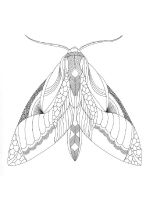 zentangle-insect-coloring-pages-17