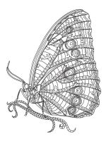 zentangle-insect-coloring-pages-2
