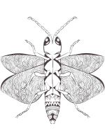 zentangle-insect-coloring-pages-21