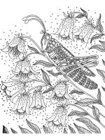 zentangle-insect-coloring-pages-5