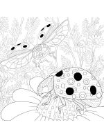zentangle-ladybug-coloring-pages-6
