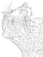 zentangle-leopard-coloring-pages-2