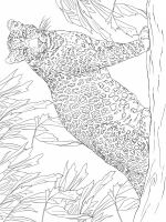 zentangle-leopard-coloring-pages-5