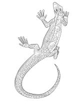 zentangle-lizard-coloring-pages-4