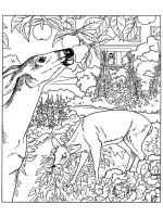 nature-coloring-pages-for-adults-11