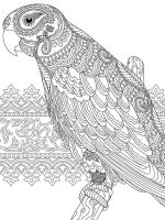 zentangle-parrot-coloring-pages-11