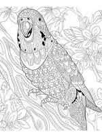 zentangle-parrot-coloring-pages-13