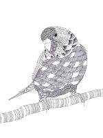 zentangle-parrot-coloring-pages-15