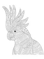 zentangle-parrot-coloring-pages-17